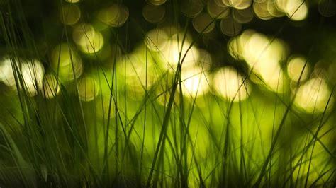 bokeh green wallpaper green grass with bokeh lights wallpaper wallpaper studio