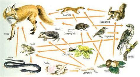 schema catena alimentare catene e reti alimentari