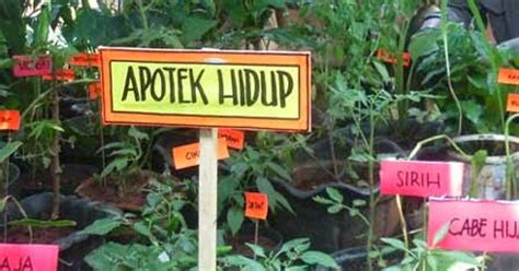 putra garden macam jenis tanaman apotek hidup  manfaatnya
