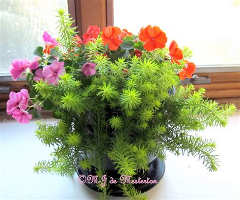 indoor flowers flowering indoor house plants www imgkid com the image