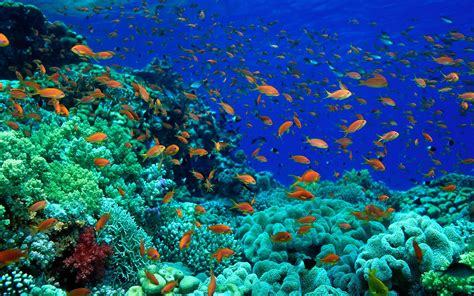 fish for life a fish pictures ocean wallpapers chapter 1 hd animal wallpapers
