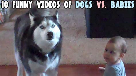 puppies vs babies 10 of dogs vs babies craveonline