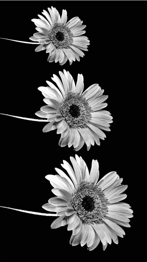wallpaper tumblr iphone white 34 best aesthetic backgrounds images on pinterest