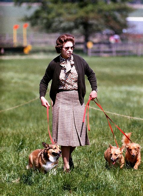 how many corgis does the queen have the inside history of queen elizabeth s eight decade corgi