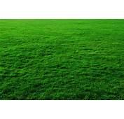 Grass Background Free Stock Photos In JPEG Jpg