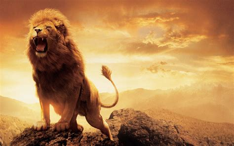 film the lion of narnia the chronicles of narnia the lion the witch and the