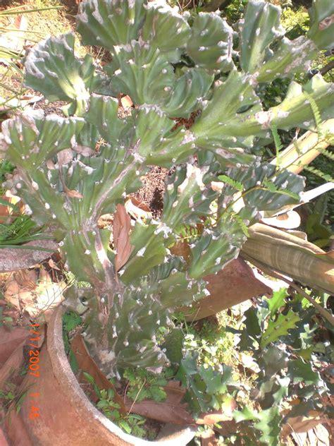 variety of plants cactus plant