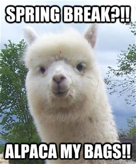 Spring Break Meme - spring break alpaca my bags alpaca pun alpaca