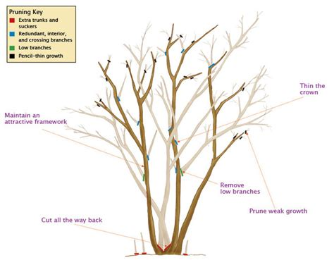 how to trim the back when going for short hair on the sides tree and shrub pruning guide fairview garden center