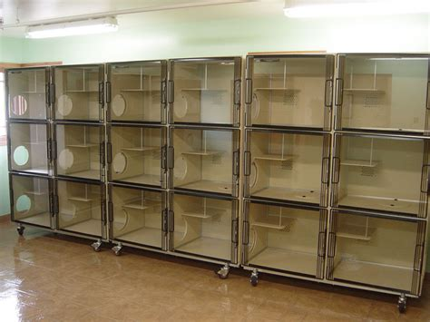 used kennels used cat kennel cat crate cats types cat kennel shelter house with door