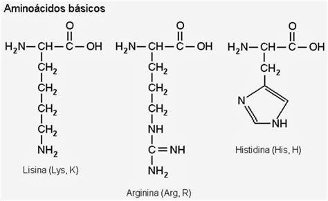 proteinas e amino cidos amino 225 cidos rlbuhos medium