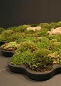 live bath mat reubenmiller live moss carpet