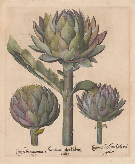 basilius beslers florilegium the inspiration 將花園搬進書頁 basilius besler s florilegium polysh