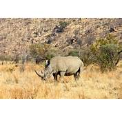 Rhinos Are One Of The Hardest Big Five To Spot But We Did It