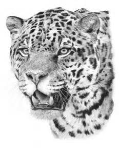 Jaguar Cat Jaguar Drawing Asap Drawings Jaguar And