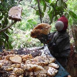 Madu Hutan Riau Asy Syifaau 500 Gram maret 2017 www sejuk net