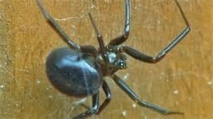 Garden Spider Uk Poisonous News Venomous Spider S Nest In Garden