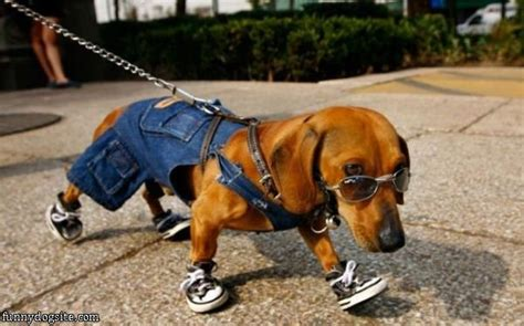 coolest dogs cool going for a walk funnydogsite