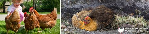 diatomaceous earth a remedy for troubled chickens