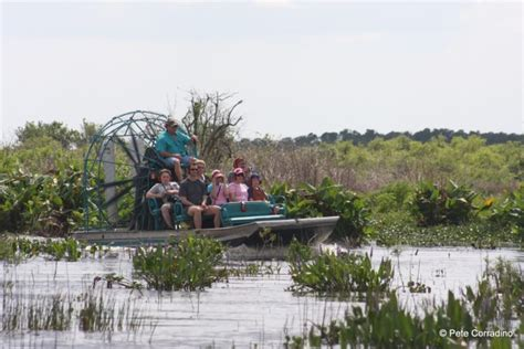 everglades airboat tours fort myers everglades day safari showing the wild side of florida