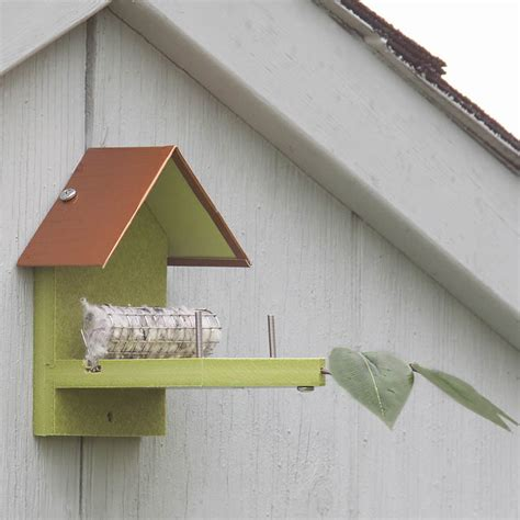 humming house image gallery hummingbird nest plans