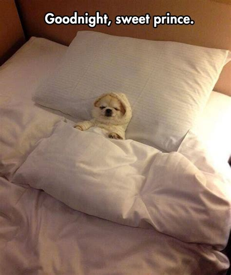 Dog In Bed Meme - sleep well
