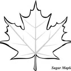 sycamore leaf coloring page sycamore maple leaf coloring page kids play color 18422