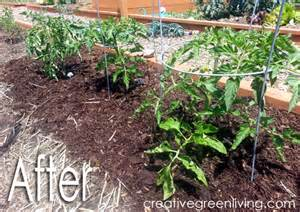 gardening 101 glorious mulch how to reduce weeds and