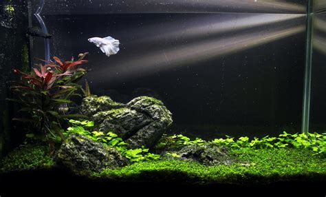 fluval spec aquascape the fluval spec v monsterfishkeepers com