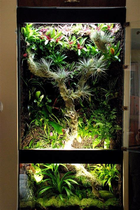 rainforest tank   lights sources vivarium