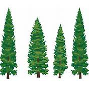 Forest Trees Clipart Wallpapers HD With Desktop 1979x1581 Px 70724