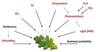 De mystifying the study of volatile organic plant compounds