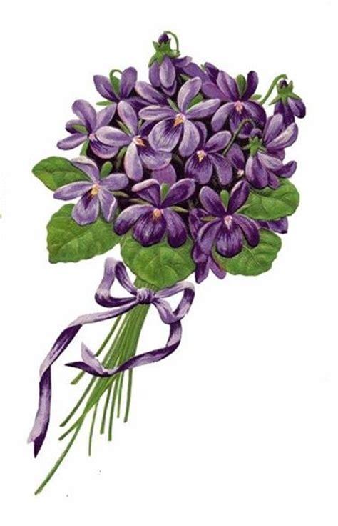 violetta fiori violetta fiore piante annuali la violetta fiore di