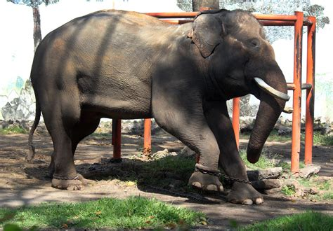 cheap thrills poor conditions plague indonesias zoos