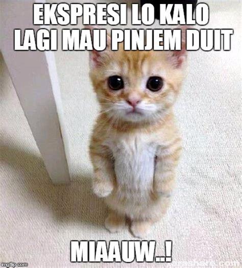 Meme Kucing - meme lucu dan kocak ala semberani jogja
