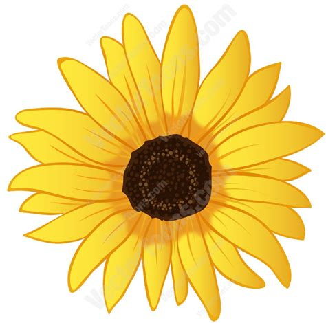 sunflower clipart yellow sunflower clipart by vector
