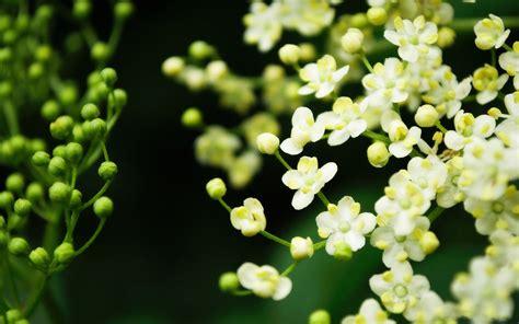 wallpaper desktop flowers flowers for flower lovers beautiful flowers desktop