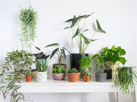 buy houseplants  seattle curbed seattle