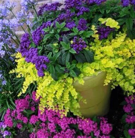 perennial container garden choosing plants for a perennial container