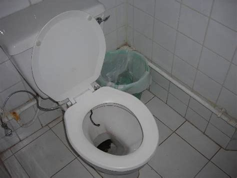 disgusting bathroom pictures 301 moved permanently
