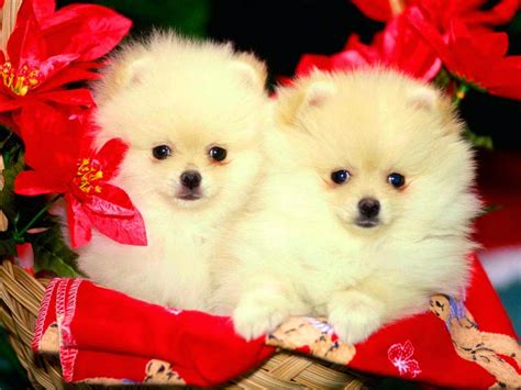 cute puppies  dogs images allfreshwallpaper