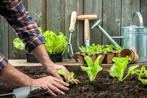gardening picture how gardening is good for your health the humble gardener