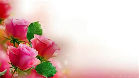 free wallpaper of rose free download beauty rose wallpapers desktop background