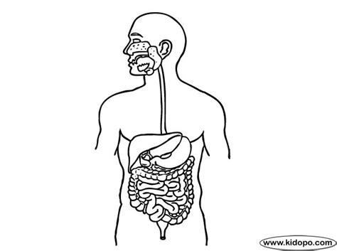 P 225 Gina Para Colorear De Sistema Digestivo Ideas 3 Nivel Digestive System Color Pages