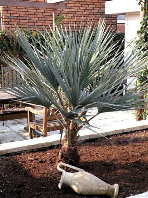 Mediterrane Pflanzen Balkon 2230 mediterrane pflanzen balkon mediterrane pflanzen f r den