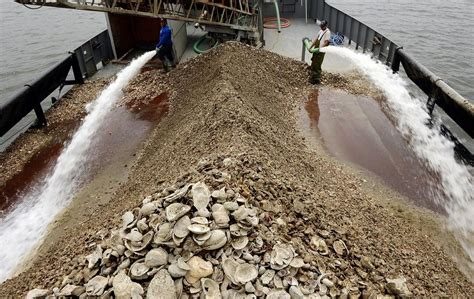 thames river oyster house the day oyster company begins effort to revive long