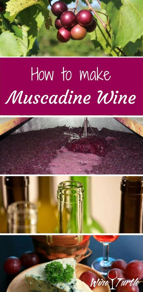 1000 ideas about muscadine wine on pinterest homemade wine recipes homemade wine making and