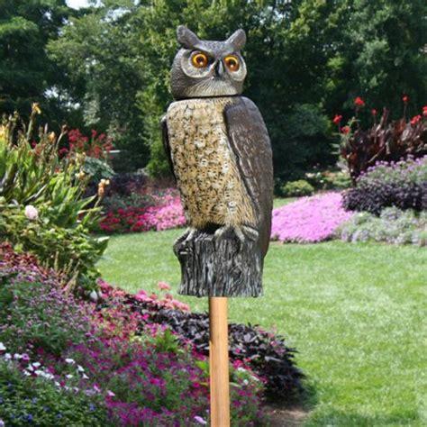 dalen scarecrow rotating head owl isons nursery vineyard