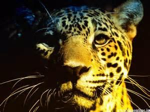 Wallpapers Of Jaguar Jaguar Animal Jaguar Cat Hd Wallpaper Johnywheels
