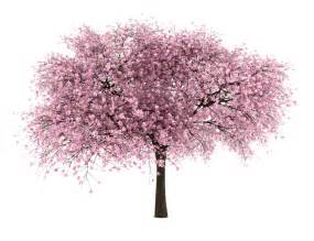 Cherry Bloosom Tree 20 tree png images free cutouts for architecture